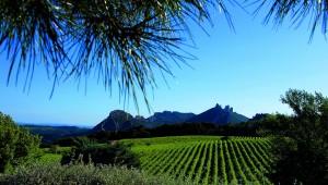 Dentelles de Montmirail, een machtig decor voor krachtige wijnen. Of hoe de ene wijngaard toch de andere niet is…