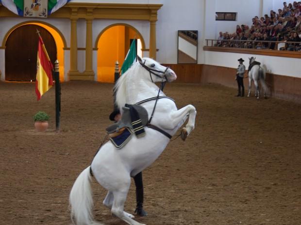 De paarden van de Real Escuela Andaluza del Arte Ecuestre zetten hun beste pootje voor.
